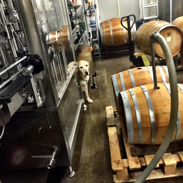 dog and bottling line