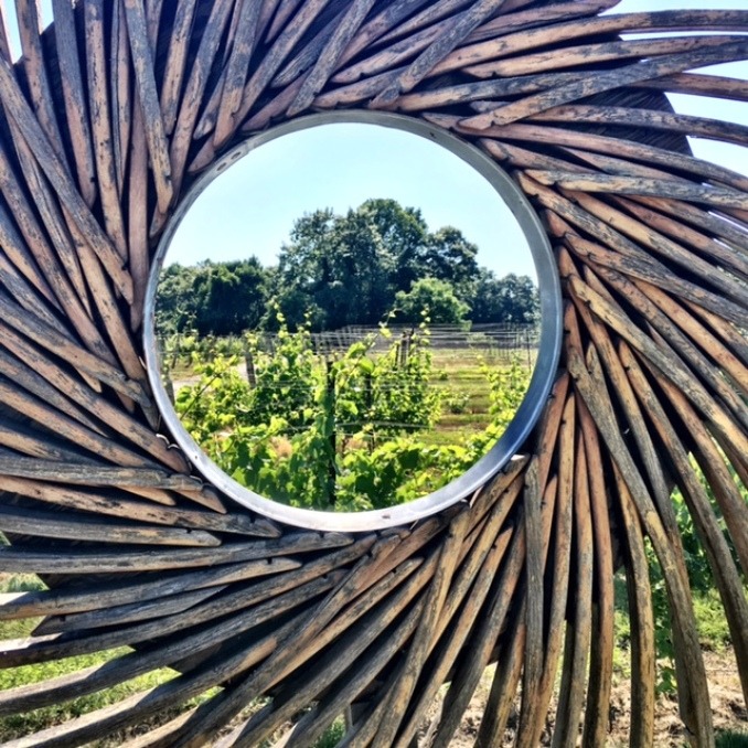 pinwheel in vineyard image