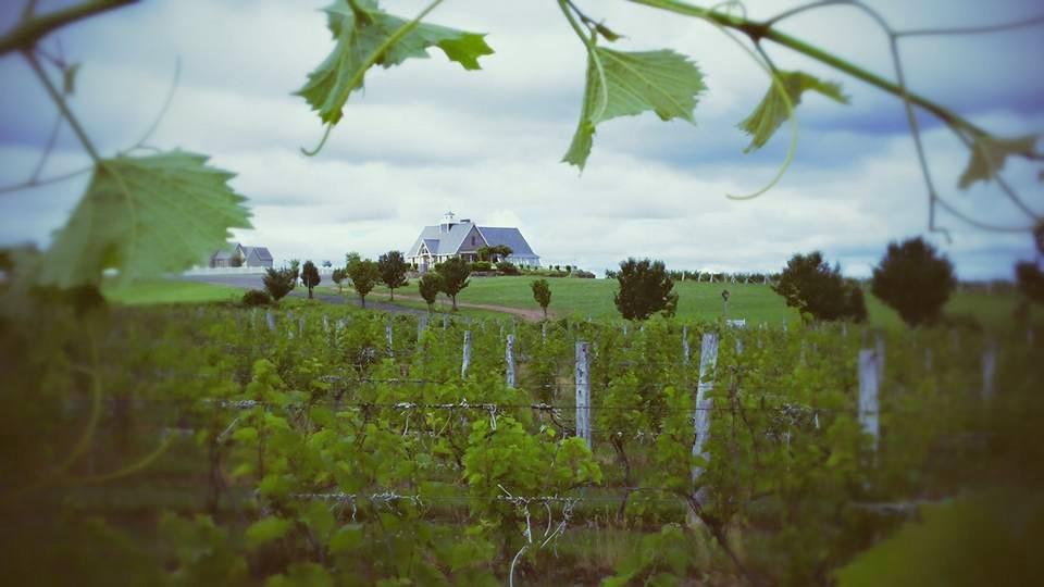 Winemaker Interview Gouveia Vineyards Threadsandvino